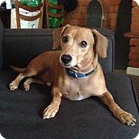 Adopt A Pet :: Kramer - Hamilton, ON
