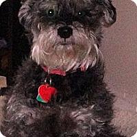 Adopt A Pet :: Maya - Toronto, ON