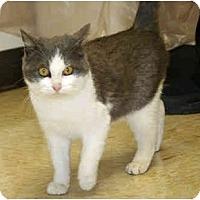Adopt A Pet :: Kazoo - Racine, WI