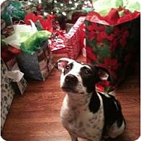 Adopt A Pet :: Blanche - Richmond, VA