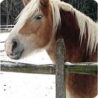 Adopt A Pet :: Butterscotch - Washington, CT