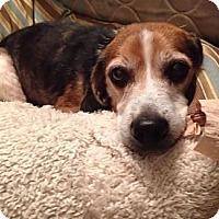 Adopt A Pet :: Retro - Novi, MI