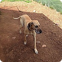 Adopt A Pet :: Duke - Manassas, VA