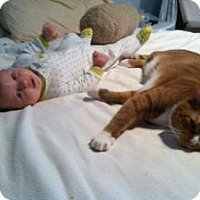 Adopt A Pet :: Tigger & Misty (URGENT 2 Beaut - bloomfield, NJ