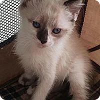 Adopt A Pet :: Duke - Harrisburg, NC