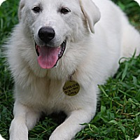 Adopt A Pet :: Daisy 2014 - Lee, MA