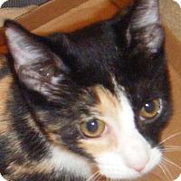 Adopt A Pet :: Wanda - Kensington, MD