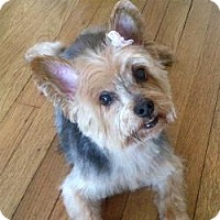 Adopt A Pet :: Maya - North Port, FL