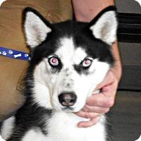 Adopt A Pet :: Helena - white settlment, TX