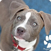 Adopt A Pet :: Tucker - Mission Viejo, CA