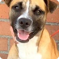 Adopt A Pet :: SHANE (video) - Los Angeles, CA