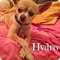 Adopt A Pet :: Hydro - Scottsdale, AZ