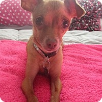 Adopt A Pet :: Nora Jones - San Diego, CA