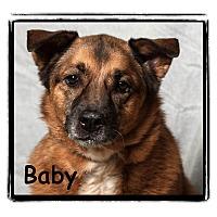 Adopt A Pet :: Baby - Warren, PA
