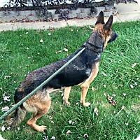 Adopt A Pet :: Hannah - Zanesville, OH