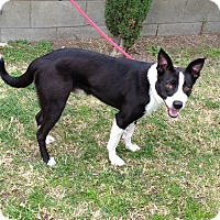 Adopt A Pet :: MIKEY - San Pedro, CA