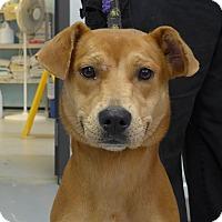 Adopt A Pet :: Echo - Manning, SC