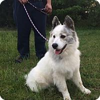 Adopt A Pet :: Talia - Irmo, SC