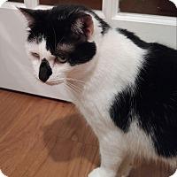 Adopt A Pet :: Sissy - Lenhartsville, PA