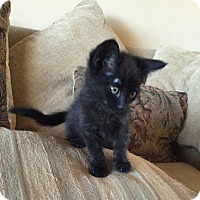 Adopt A Pet :: Manny - Mission Viejo, CA