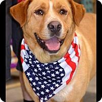 Adopt A Pet :: Boozer - Albemarle, NC