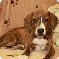 Adopt A Pet :: Oscar - Allentown, PA