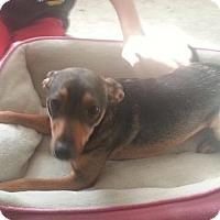 Adopt A Pet :: Willow - Willingboro, NJ