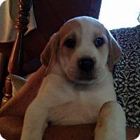 Adopt A Pet :: Charlie - Charlestown, RI