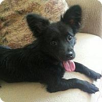Adopt A Pet :: Java - Alexandria, KY