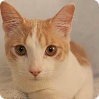 Adopt A Pet :: Azurite 04-4044 - Fremont, CA