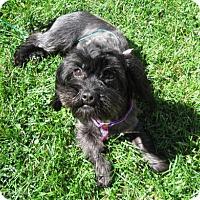 Adopt A Pet :: Joy - South Bend, IN