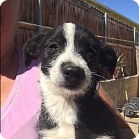 Adopt A Pet :: Laverne - Thousand Oaks, CA