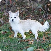 Adopt A Pet :: rascal - Rochester, NH