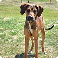 Adopt A Pet :: Dudly D3074 - Shakopee, MN
