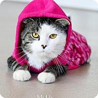Adopt A Pet :: Mcfly - Appleton, WI