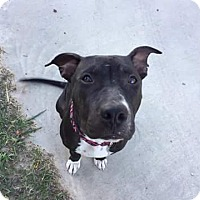 Adopt A Pet :: Jackie - Weatherford, TX