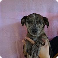 Adopt A Pet :: Dojo - Oviedo, FL