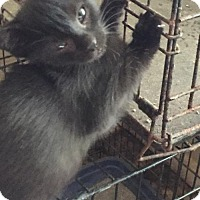 Adopt A Pet :: Jenn - Centreville, VA