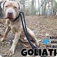 Adopt A Pet :: Goliath - Jackson, NJ