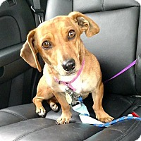 Adopt A Pet :: Hannah2 - Orangeburg, SC