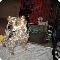 Adopt A Pet :: KRAMER - Port Clinton, OH