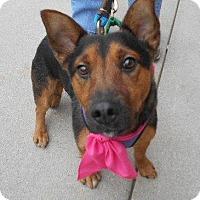 Adopt A Pet :: Lilly-ADOPTED!!! - Ashland, VA