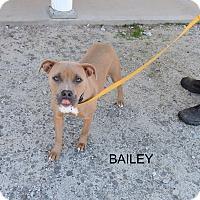 Adopt A Pet :: Bailey - Washington, GA