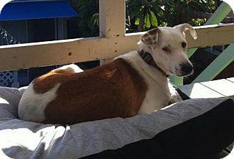 Australian Cattle Dog/Collie Mix Dog for adoption in El Cajon, California - LEXIE, watch my video!