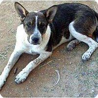 Adopt A Pet :: Danny - Tonopah, AZ
