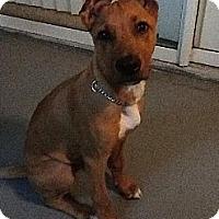 Adopt A Pet :: Riley - Coral Springs, FL