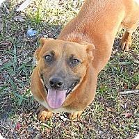 Adopt A Pet :: Otis - Ormond Beach, FL