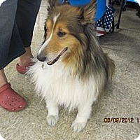 Adopt A Pet :: Duncan - apache junction, AZ