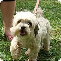 Adopt A Pet :: Upton - Allentown, PA