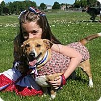 Adopt A Pet :: Butterball - Salem, OR